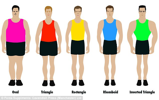 Getting in shape: Researchers examined the physical characteristics of 2,000 men to determine the five most common body types, illustrated in the graphic above